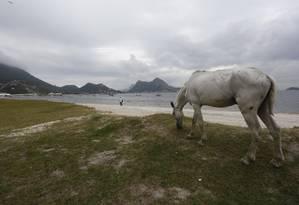 Cavalos são as maiores vítimas do 'novo' vírus: quatro amostras de animais do Espírito Santo deram positivo para a febre, em exames moleculares Foto: Fábio Guimarães / Agência O Globo