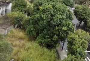 Visto de cima. O matagal que toma conta do terreno na Heitor Beltrão Foto: Foto de leitor / foto da leitora carmen carvalho