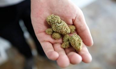 Empregado de um dispensário em Toronto mostra um pouco da maconha à venda na loja: droga foi legalizada no Canadá Foto: CHRIS WATTIE / REUTERS