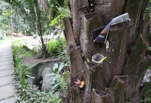 Sujeira: tronco de árvore serve de lixeira no Campo de São Bento, principal área verde da cidade Foto: Pedro_Teixeira / Agência O Globo