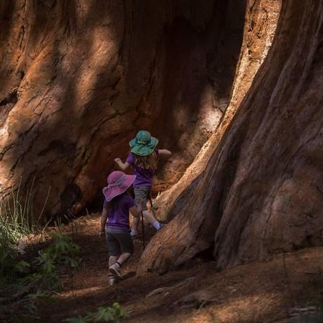Crianças brincam perto de uma das sequoias gigantes de Mariposa Grove, parte do Parque Nacional de Yosemite, na Califórnia, que voltou a receber visitantes Foto: DAVID MCNEW / AFP