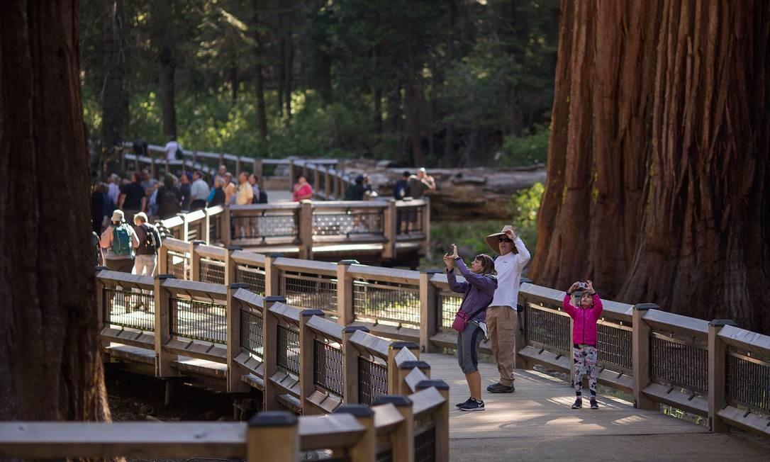 Uma das mudanças do setor visitável de Mariposa Grove, no Parque Yosemite, é a passarela suspensa para preservar o solo Foto: DAVID MCNEW / AFP