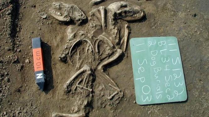 Cães cuidadosamente enterrados sugerem relação especial com humanos Foto: Illinois State Archaeological Survey, Prairie Research Institute
