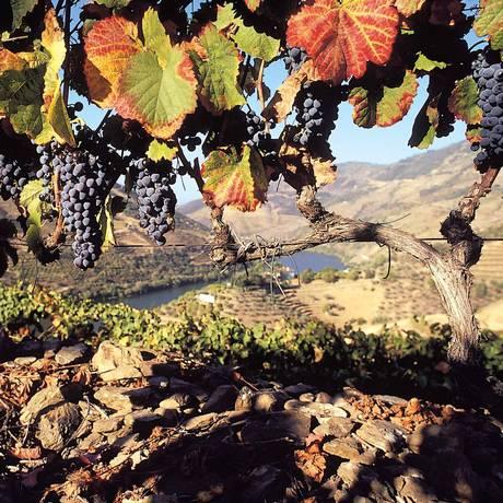 Douro. Paisagem das vinhas da Quinta do Bomfim Foto: Divulgação