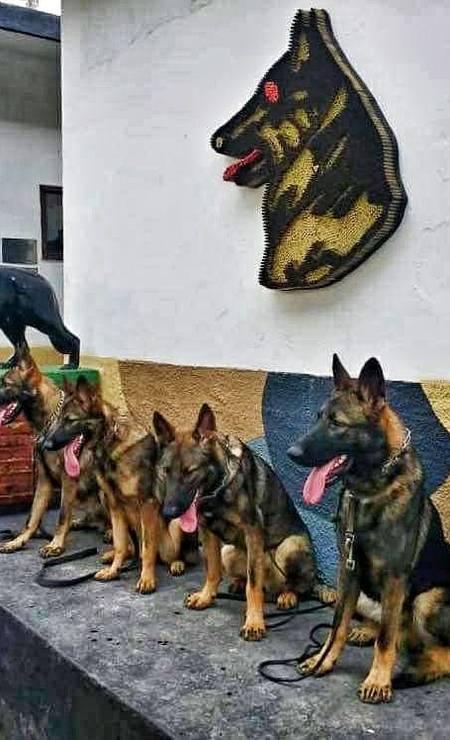 O símbolo do Batalhão de Ações com Cães Foto: Arquivo pessoal