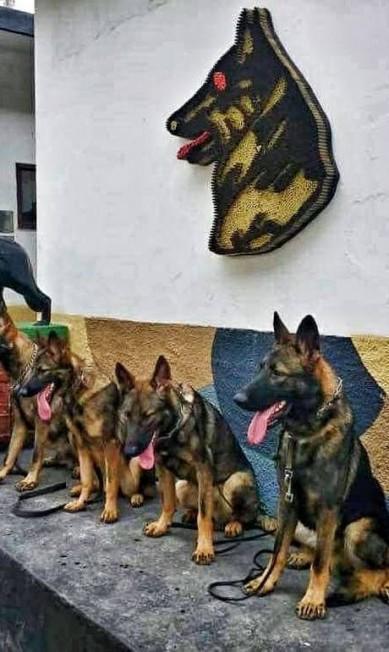 O símbolo do Batalhão de Ações com Cães Arquivo pessoal