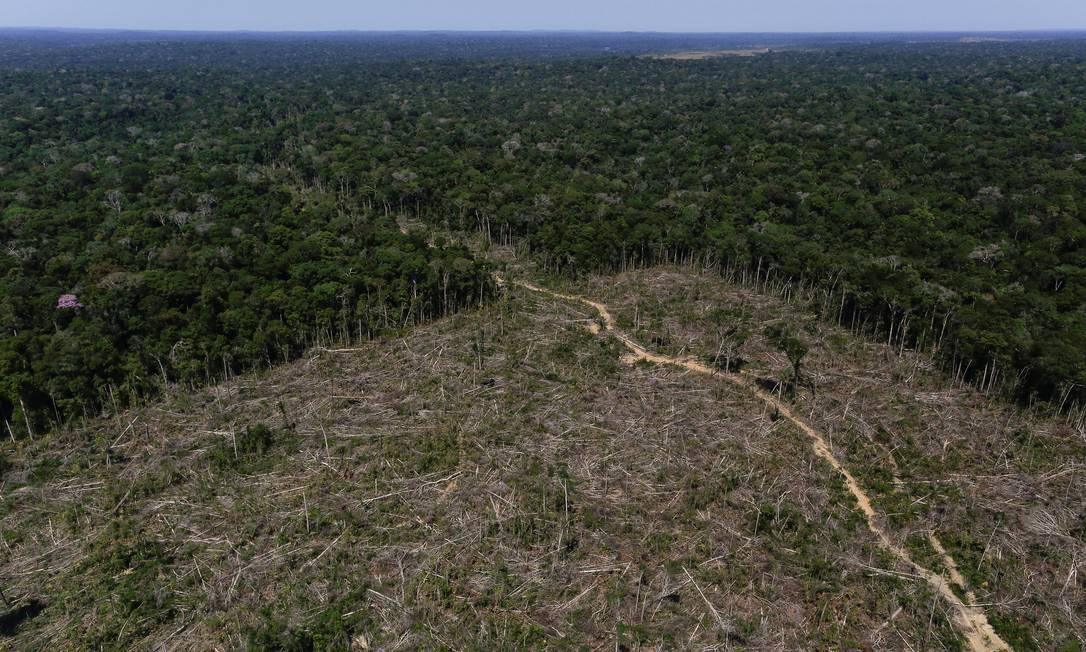 Nos últimos anos o desmatamento no país vem aumentando, após forte redução entre 2005 e 2012 Foto: BRUNO KELLY / REUTERS