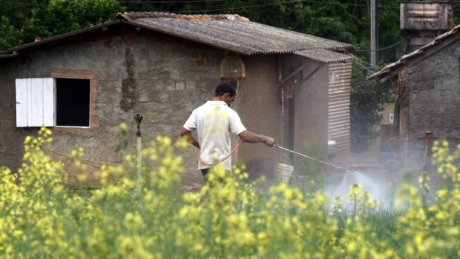 Substância presente em pesticida comumente usado em todo o mundo é acusada de causar Linfoma não-Hodgkin, um tipo de câncer no sangue Foto: Custódio Coimbra