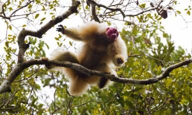 As florestas tropicais, como a Amazônia, são os ecossistemas com maior biodiversidade do planeta Foto: Marcelo Ismar Santana / Divulgação
