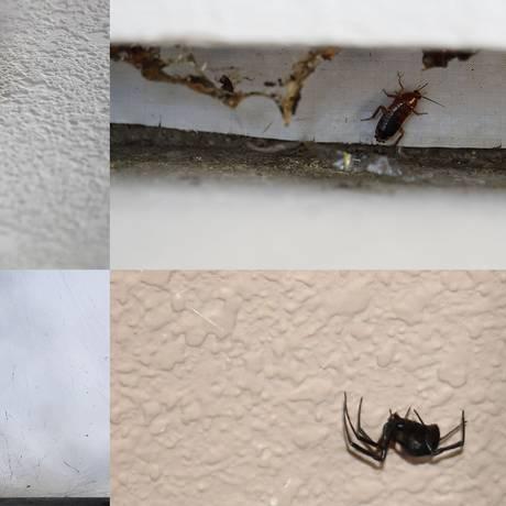 A moradora Whitney Hurst documentou com fotos problemas em diferentes partes da casa, incluindo insetos. REUTERS/ Whitney Hurst