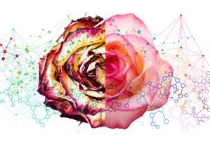 Bioestimulares Foto: Ilustração de Silvana Mattievich