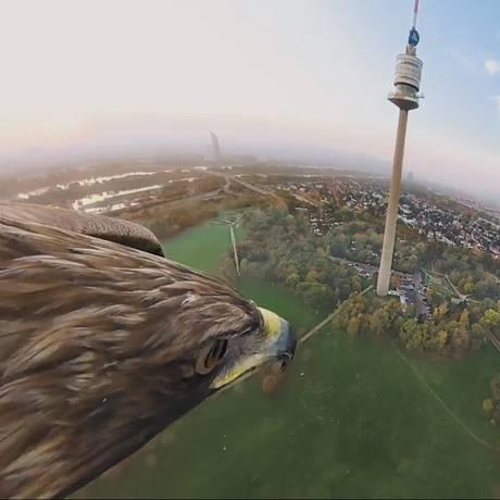 Águia se prepara para pousar perto da Torre do Danúbio, após sobrevoar Viena, na Áustria Foto: Turismo de Viena/Red Bull Media House / Divulgação