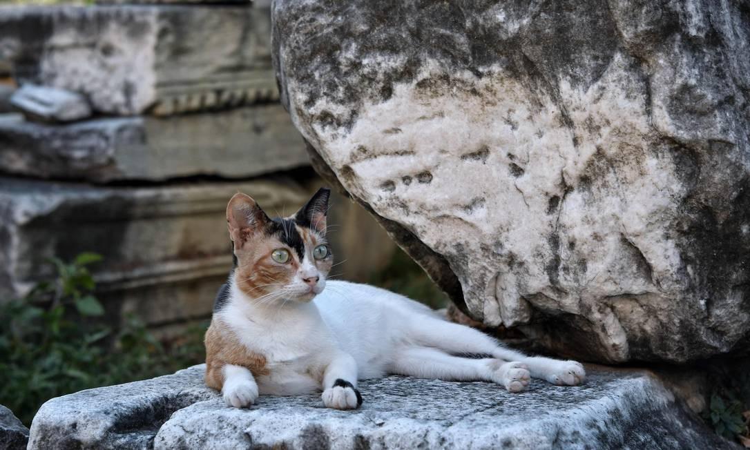 No Brasil, estima-se que existam cerca de 7 milhões de gatos espalhados pelo país LOUISA GOULIAMAKI / AFP