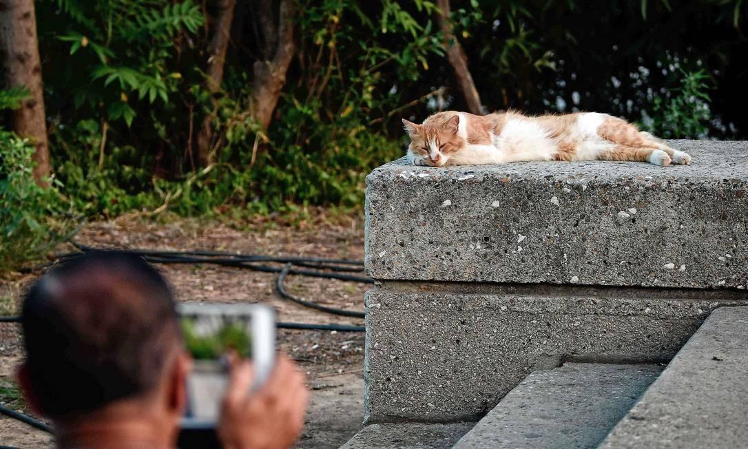 8 de agosto é comemorado o Dia Internacional do Gato, instituído em 2002 pela International Fund For Animal Welfare LOUISA GOULIAMAKI / AFP