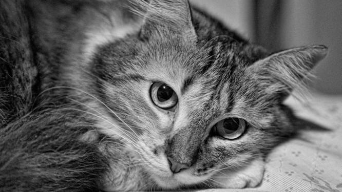 Gato de estimação / Margarida Foto: Frima Santos / Divulgação