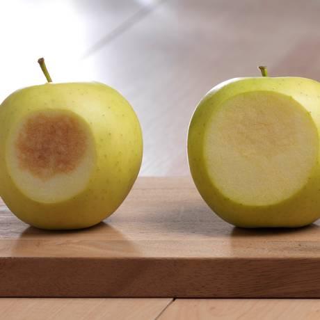 Modificação genética feita pela empresa americana Okanagan Specialty Fruits gerou maçãs que retêm melhor o conteúdo nutritivo de antioxidantes e vitamina C Foto: Divulgação/Patrick Tregenza / .