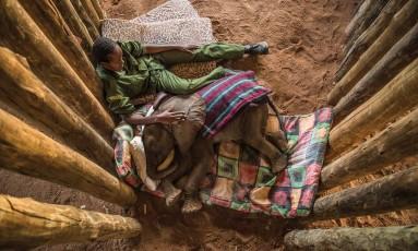 A relação entre elefantes e uma comunidade africana é uma das histórias contadas na mostra Foto: Ami Vitale / Divulgação