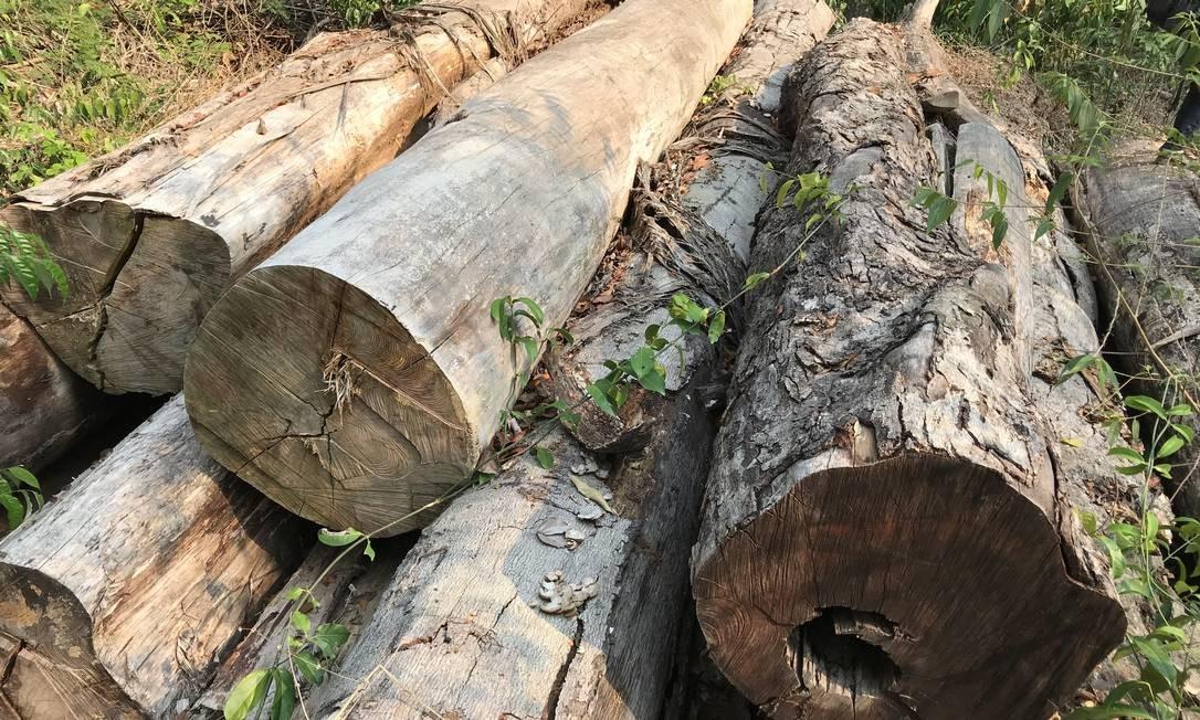 Toras de madeira encontradas na Amazônia Foto: Divulgação/USP