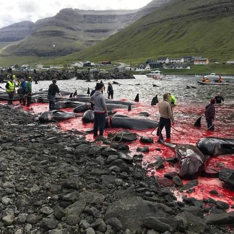 Matança de baleias nas Ilhas Faroe, território da Dinamarca, vitima centenas de animais a cada ano Foto: Divulgação/Sea Shepherd / .