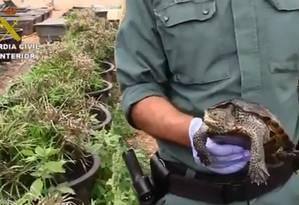 Polícia resgatou mais de mil tartarugas em fazenda de criação ilegal na Espanha Foto: Reprodução / Twitter