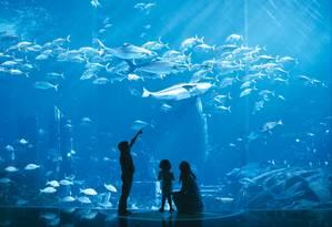 Dubai Aquarium & Underwater Zoo, uma das atrações mais populares entre as famílias Foto: Divulgação