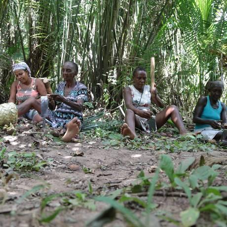 Quebradeiras de Coco Babaçu, em ação, no Maranhão Foto: Divulgação Miqcb (Movimento Interestadual das Quebradeiras de Coco Babaçu)