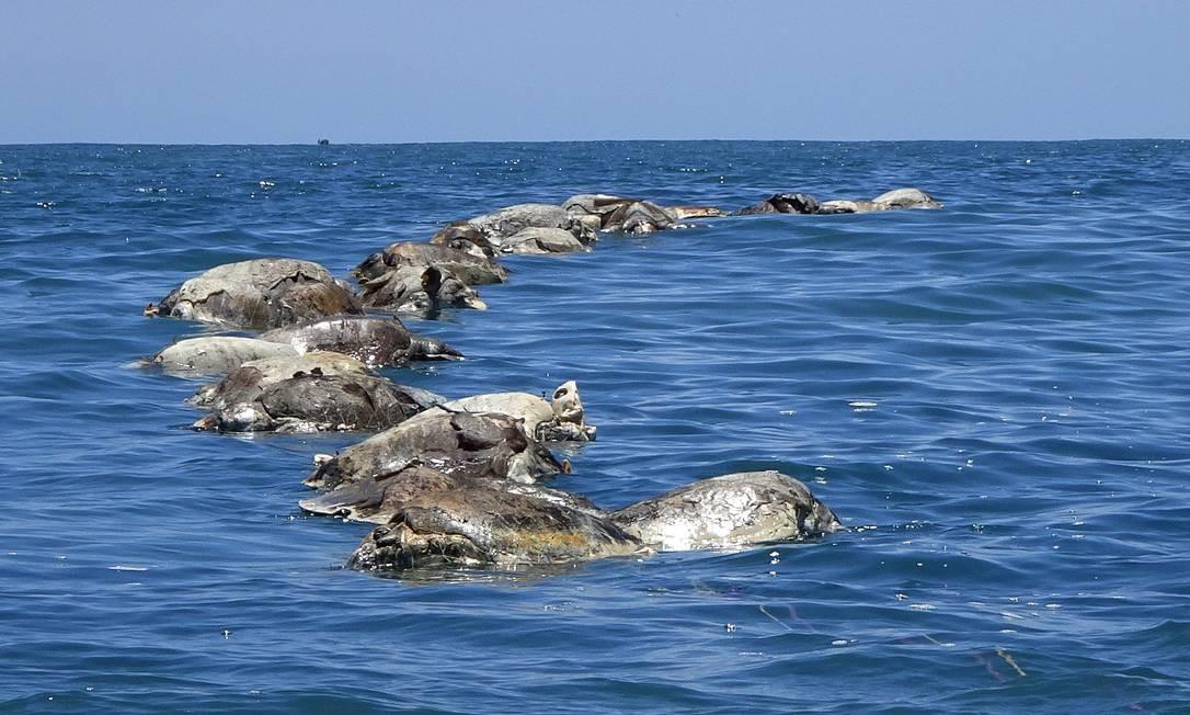 Tartarugas presas a redes e mortas no México Foto: STRINGER / REUTERS