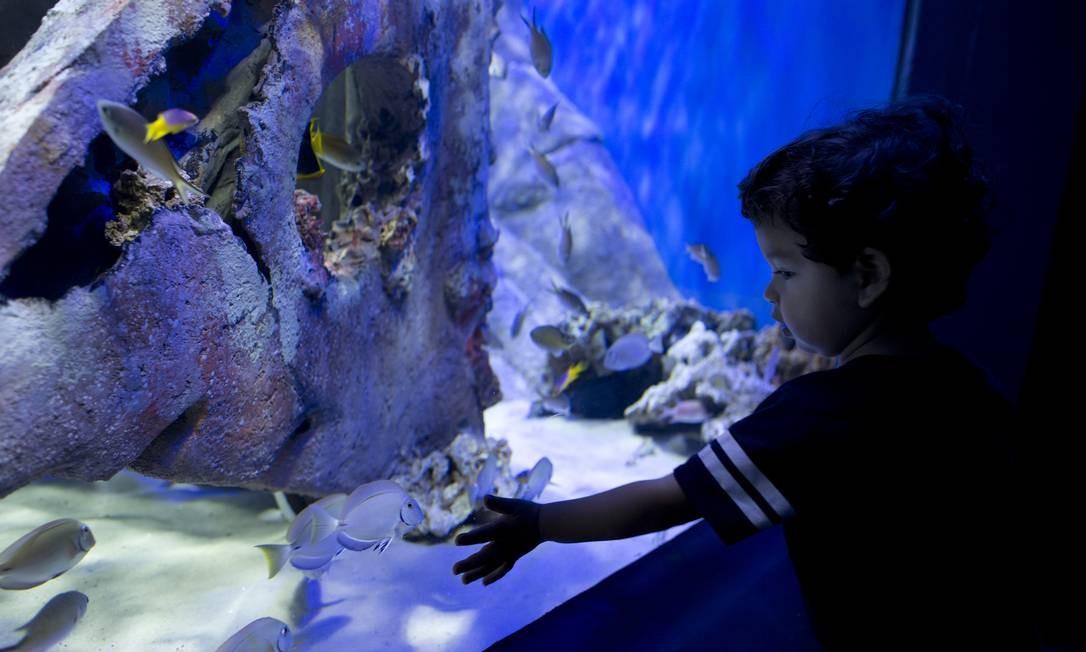 AquaRio inaugura novo recinto com espécies importantes da Ilha de Trindade, considerada uma das maiores reservas marinhas do Oceano Atlântico Foto: Márcia Foletto / Agência O Globo