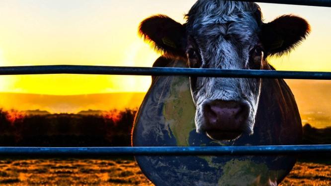 Cowspiracy coloca a indústria da carne na berlinda, como o maior vilão na preservação do planeta Foto: Divulgação