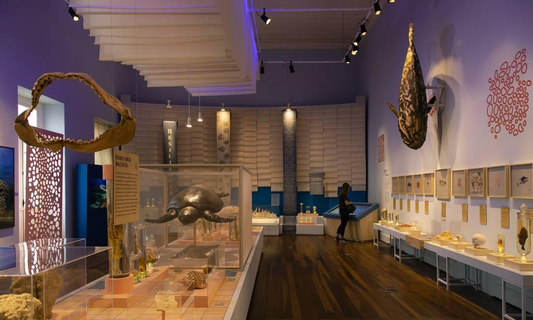Na Zoologia, destacava-se a coleção conchas, corais e brboletas, que o museu possuia Foto: Leo Martins / 10/07/2018