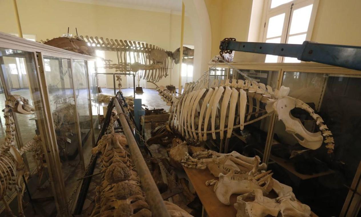 O museu possuía um acervo de mais de 20 milhões de itens, muitos deles não estavam expostos Foto: Domingos Peixoto / 26-02-2016