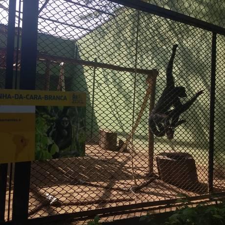 Funcionários do zoológico garantem que incêndio no Museu Nacional não comprometeu a saúde dos animais Foto: Katia Gonçalves / Agência O GLOBO