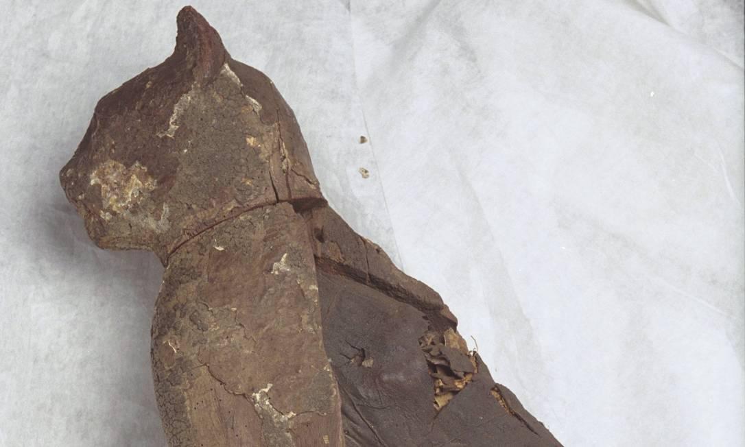 Múmia de gato fazia parte do acervo do Museu Nacional Foto: Márcia Foletto / Agência O Globo