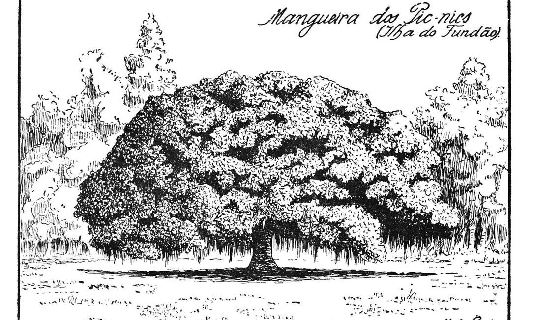 Mangueira dos pic-nics na Ilha do Fundão Foto: Reprodução