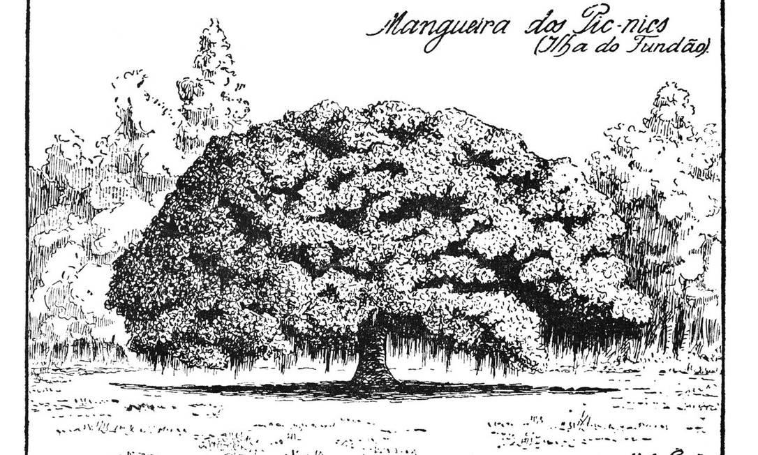 Mangueira dos pic-nics na Ilha do Fundão Reprodução