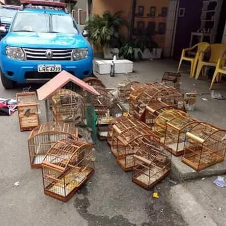 PM apreende 30 aves silvestres Foto: Divulgação