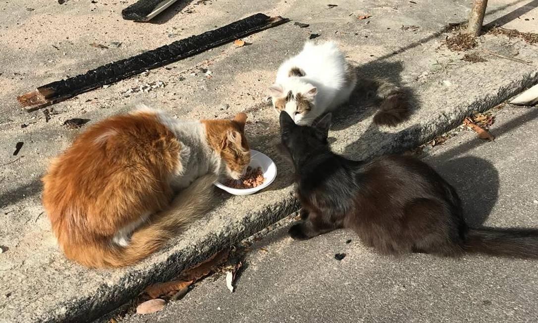 Alguns dos gatos que vivem na área próxima ao Museu Nacional Foto: Subsecretaria do Bem Estar Animal / Divulgação