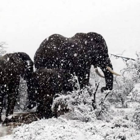 Elefantes são registrados no meio da neve em região montanhosa da África do Sul Foto: Kitty Viljoe/ Instagram