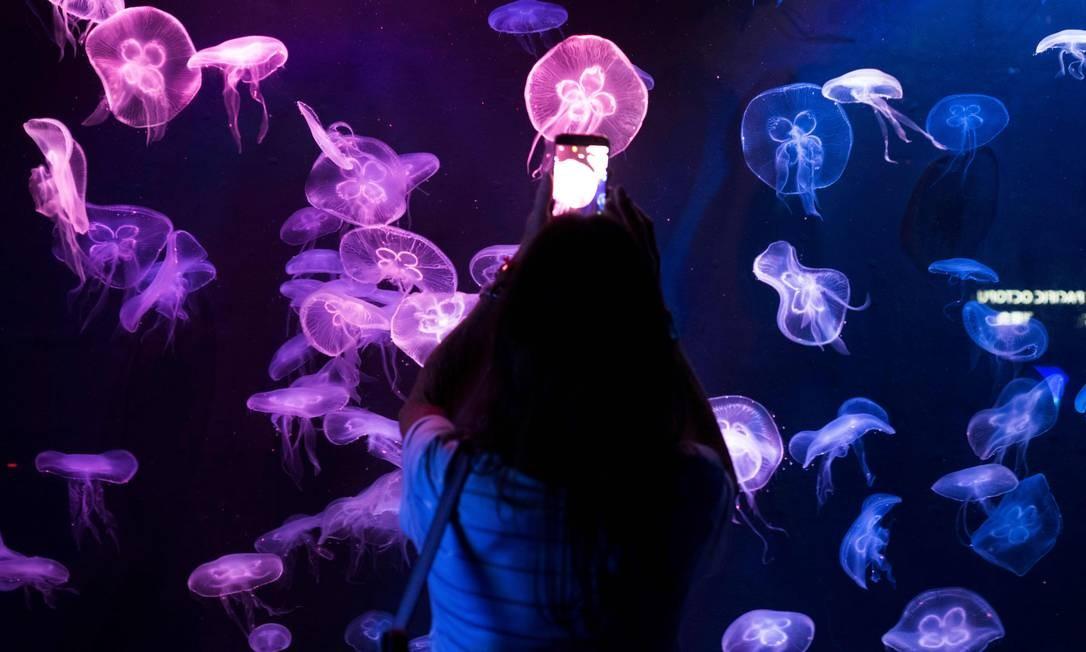 Um turista tira fotos de águas-marinhas enquanto visita o Aquário na ilha de Sentosa, em Cingapura Foto: JEWEL SAMAD / AFP