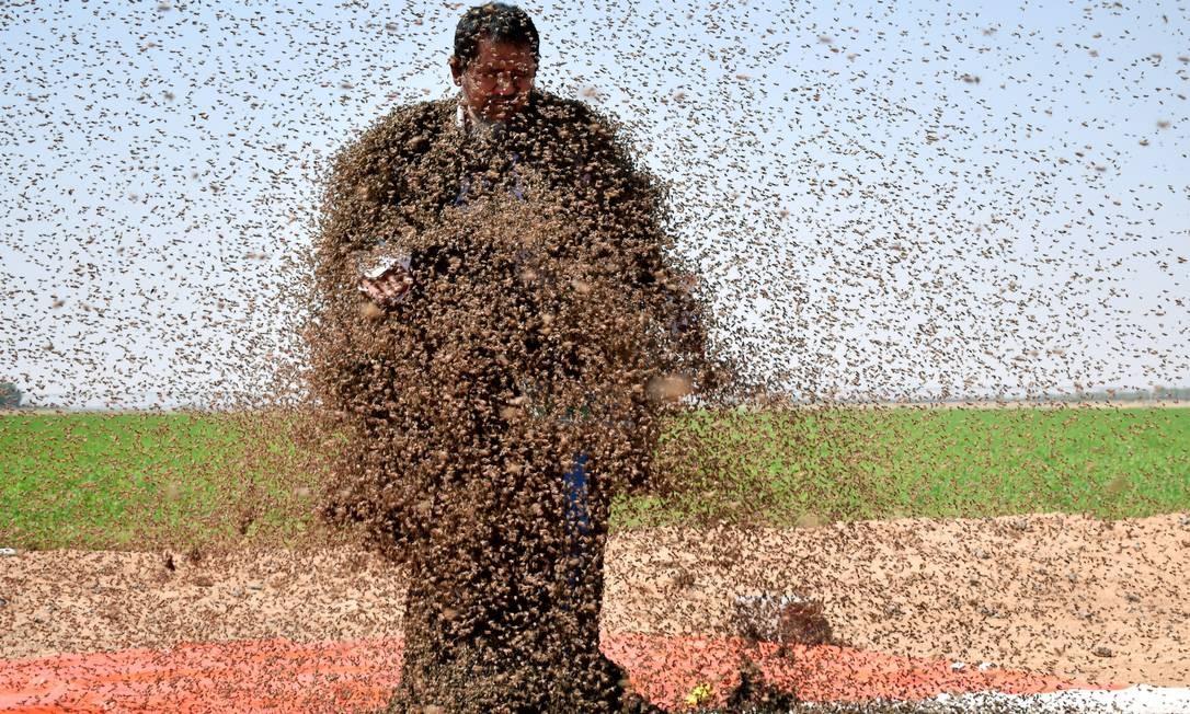 Um homem deixa seu corpo ser coberto de abelhas para posar para uma foto em Tabuk, na Arábia Saudita Foto: MOHAMED AL HWAITY / REUTERS