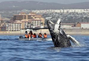 Grupo observa baleia nas águas do Oceano Pacífico, no México Foto: FERNANDO CASTILLO / AFP