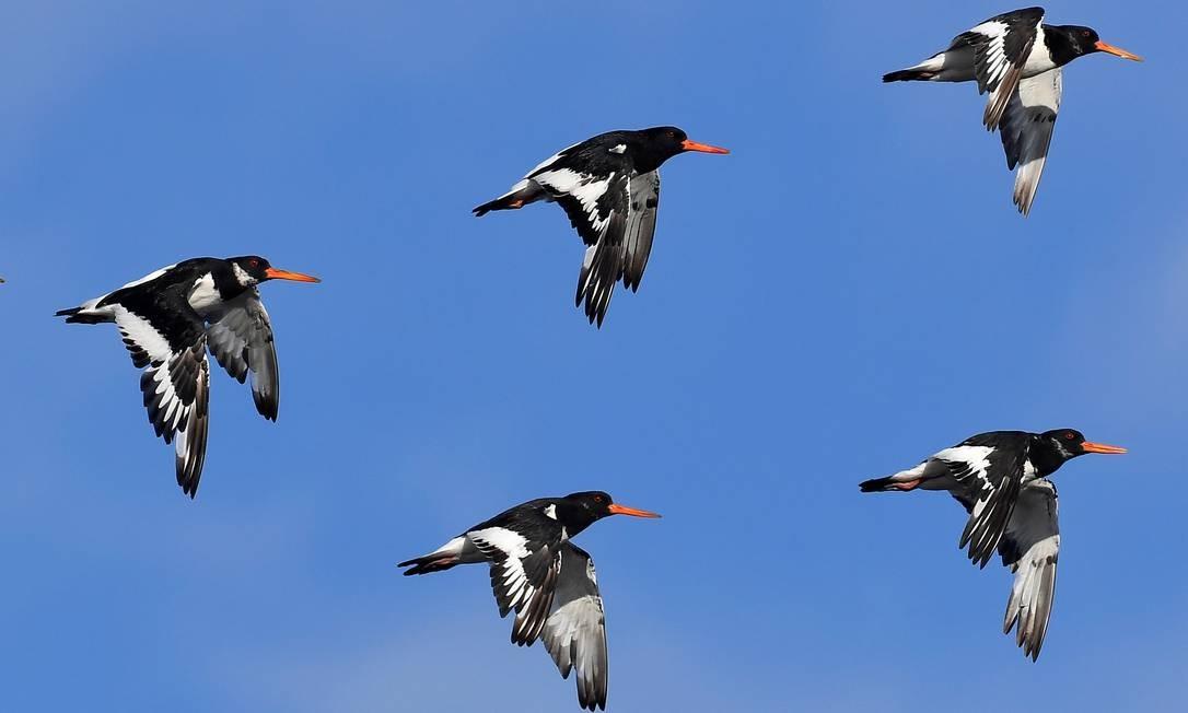 Aves voam para bancos de areia secos durante mês no estuário The Wash, perto de Snettisham em Norfolk, Grã-Bretanha TOBY MELVILLE / REUTERS