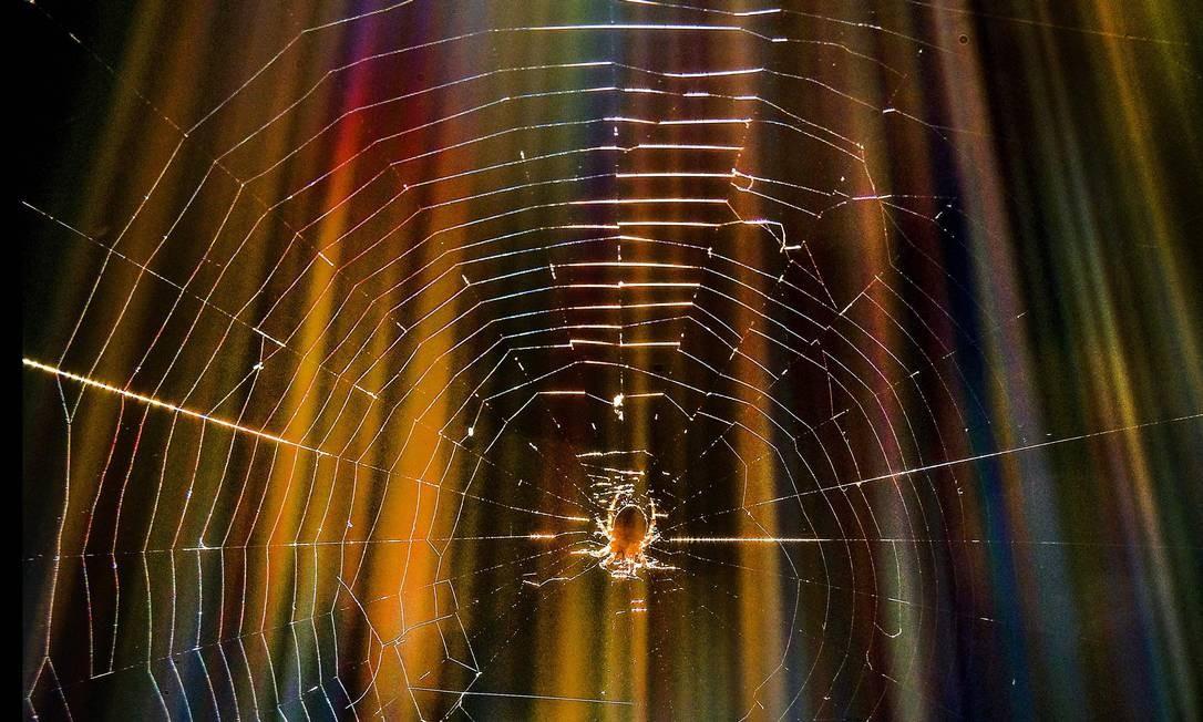 Uma aranha gira uma teia em uma floresta nos arredores de Moscou YURI KADOBNOV / AFP