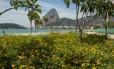 Primavera já mudou o tom na paisagem do Aterro do Flamengo Foto: Brenno Carvalho / Agência O Globo