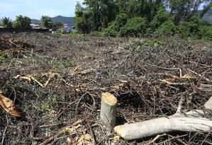Ilegal: desmatamento em área de preservação permanente revolta moradores Foto: Roberto Moreyra / Agência O Globo