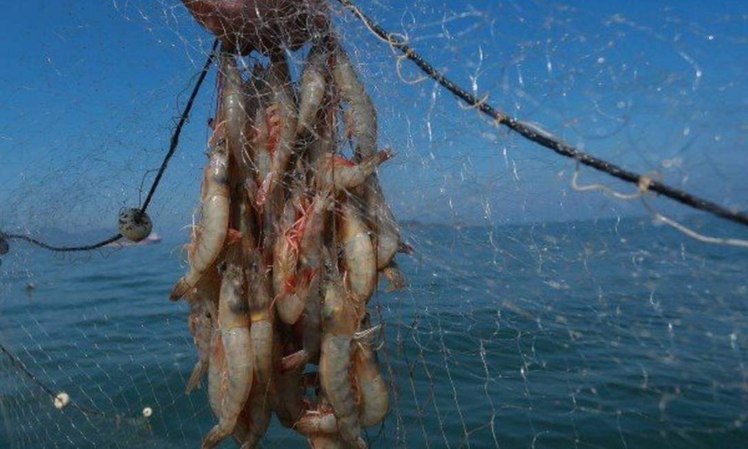 """Medidas de proibição da pesca são tomadas, segundo o governo, """"por precaução"""" Foto: Marcelo Régua / Agência O Globo"""