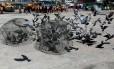 Funcionários da Prefeitura de Bangcoc capturam pombos numa praça Foto: SOE ZEYA TUN / REUTERS