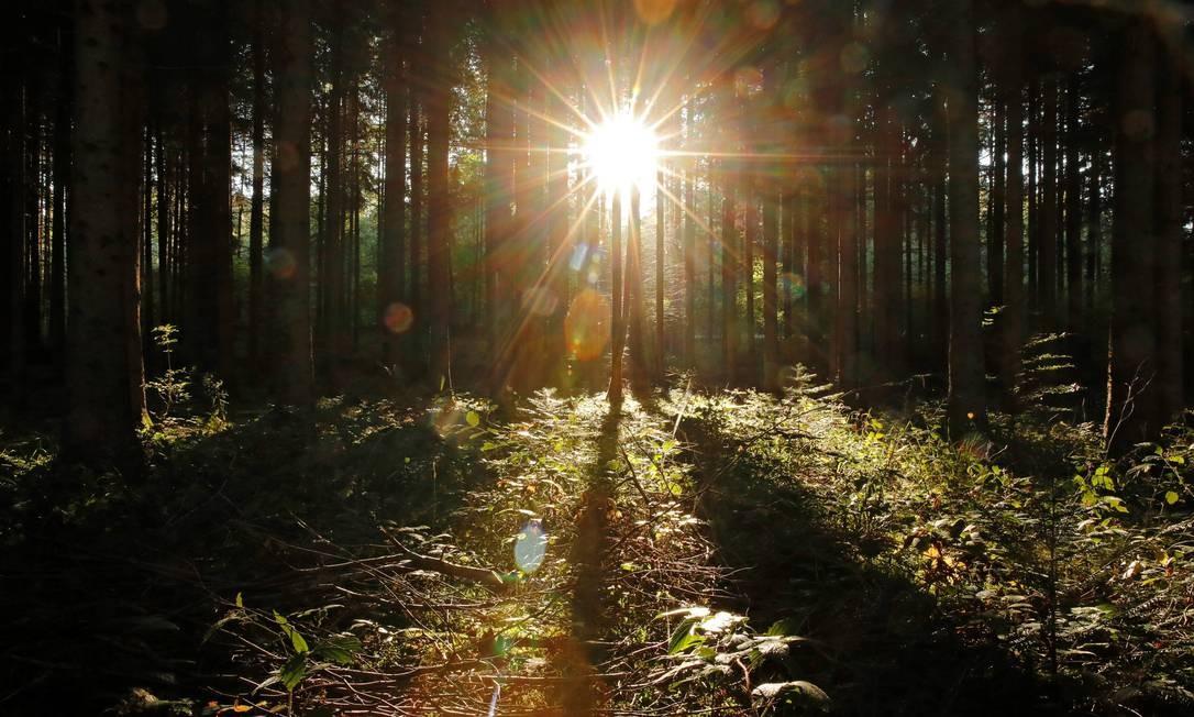 Nascer do sol em uma floresta perto de Biere, Suíça. Foto: DENIS BALIBOUSE / REUTERS