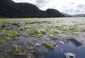 Os vegetais marinhos do tipo Ulva surgirão em diversas partes da Lagoa de Piratinga há cerca de um mês Foto: Paulo Oberlander / Divulgação