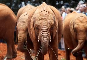 Bebês elefantes no Quênia: pele enrugada intrigou cientistas Foto: BAZ RATNER / REUTERS/2-10-2018